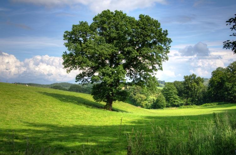 Flourishing Tree-17.jpeg